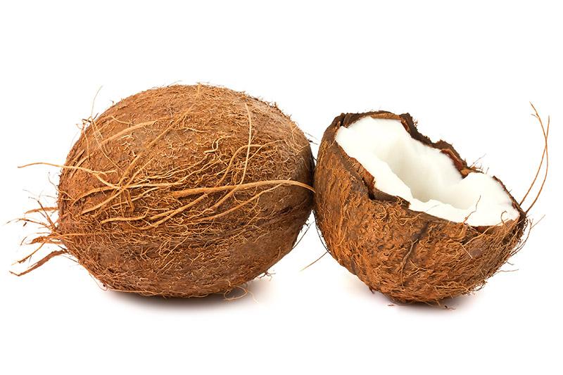 Die Kokosnuss
